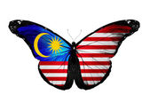 Malaysian flag butterfly, isolated on white background — Stock Photo