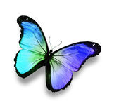Color butterfly, isolated on white — Stock Photo