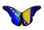Bosnia and Herzegovina flag butterfly flying, isolated on white background — Stock Photo