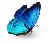 Blue butterfly , isolated on white — Stock Photo
