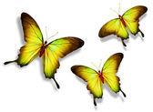 Tři žlutý motýl, izolovaných na bílém pozadí — Stock fotografie