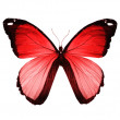 Red butterfly , isolated on white — Stock Photo #23478339