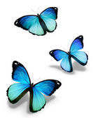 Three blue butterflies, isolated on white — Stock Photo