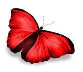 Borboleta vermelha, isolada no branco — Foto Stock