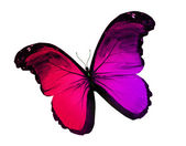 Red violet butterfly, isolated on white background — Stock Photo