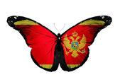 Montenegro flagga fjäril, isolerad på vit bakgrund — Stockfoto