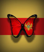 Montenegro flag butterfly, isolated on flag background — Stock Photo