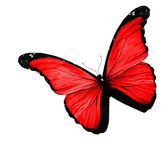 Red butterfly on white background — Stock Photo