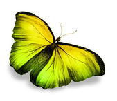 Morpho yellow butterfly , isolated on white — Stock Photo
