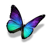 Morpho-Farbe-Schmetterling, isoliert auf weiss — Stockfoto
