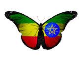 Etiopské vlajky motýl, izolovaných na pozadí vlajky — Stock fotografie