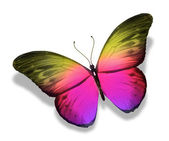 Color butterfly, isolated on white background — Stock Photo