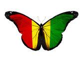 Mariposa bandera de guinea volando, aislado sobre fondo blanco — Foto de Stock