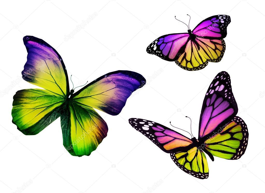 Mariposa De Tres Colores, Aislado Sobre Fondo Blanco