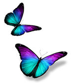 Two color butterflies on white — Stock Photo