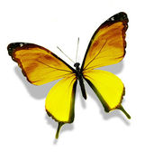 Yellow bright butterfly, isolated on white — Stock Photo