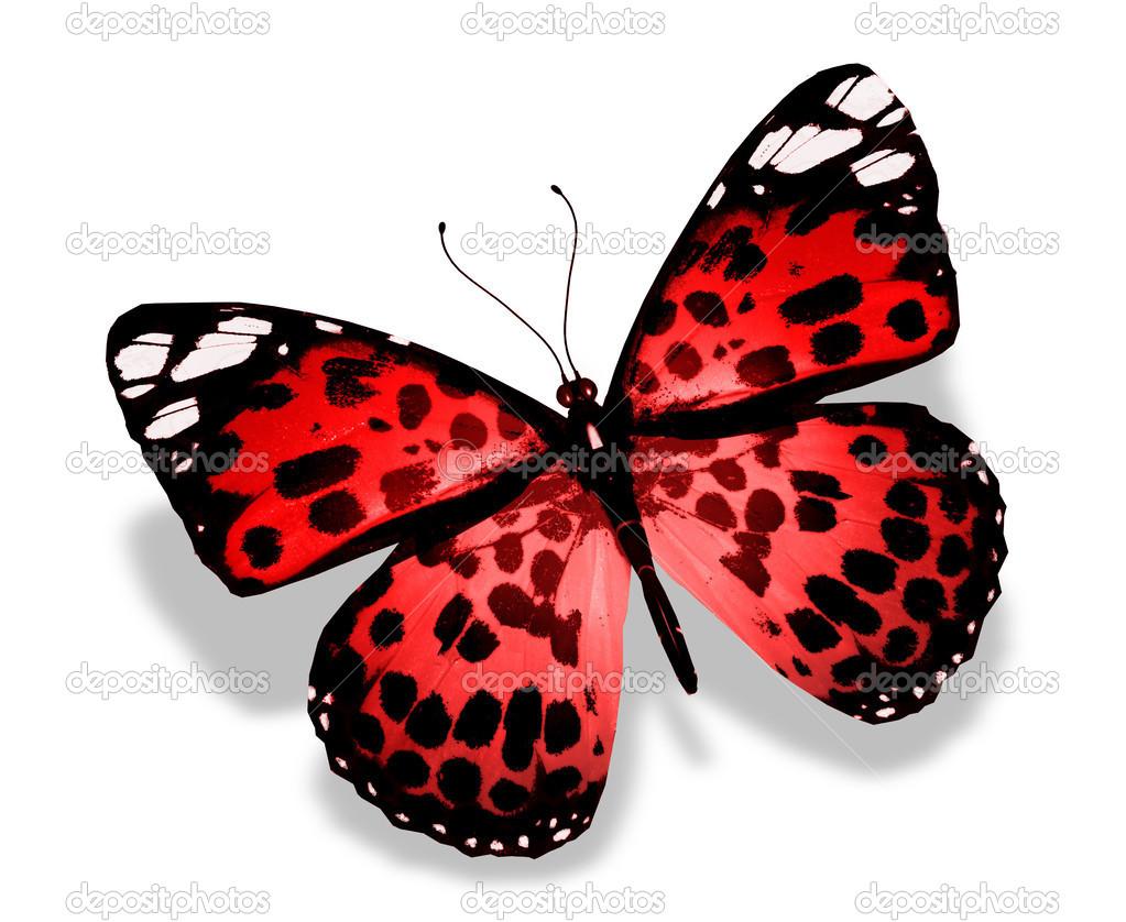 papillon rouge isol sur fond blanc photographie sun tiger 26272279. Black Bedroom Furniture Sets. Home Design Ideas