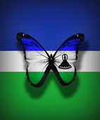 Lesotho flag butterfly, isolated on flag background — Stock Photo