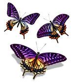 Mariposa de tres colores, aislado sobre fondo blanco — Foto de Stock