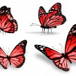 Stock Photo: Four red butterfly, isolated on white background