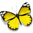 Yellow butterfly on white background — Stock Photo #27638383