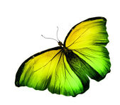 Yellow butterfly flying on white background — Stock Photo