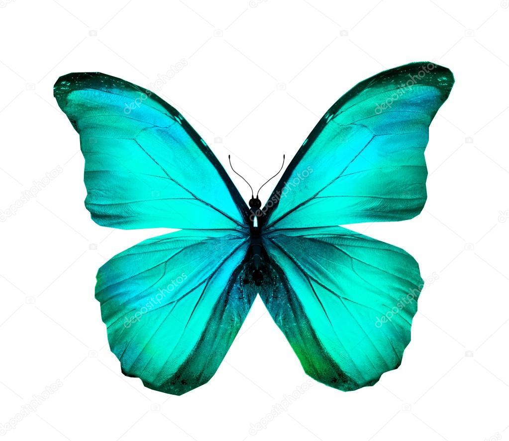 mariposa morpho azul turquesa aislado en blanco foto de clipart of butterflies in wildflowers clipart of butterfly with eyes