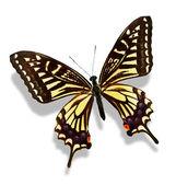 Farfalla color, isolato su bianco — Foto Stock