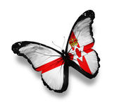 Ulster flag butterfly, isolated on white — Stock Photo