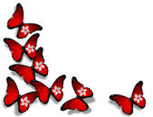 Hong Kong flag butterflies, isolated on white background — Stock Photo