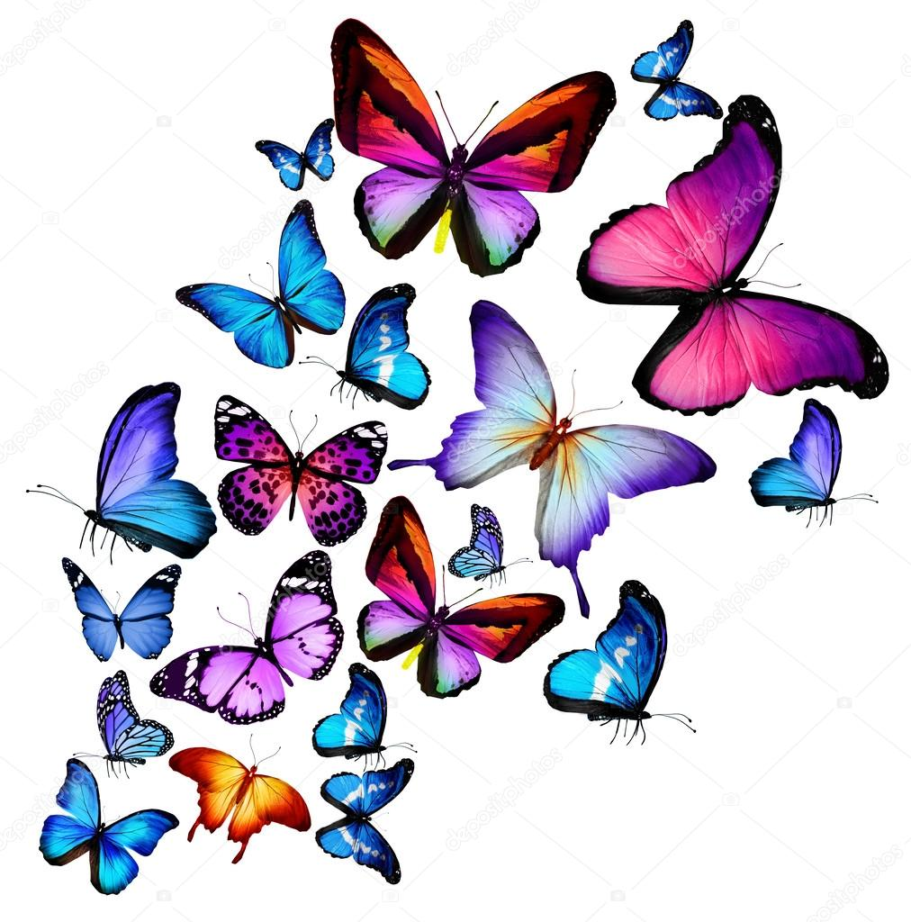 许多不同的蝴蝶飞,孤立在白色背景 - 图库图片