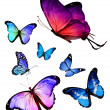 Stock Photo: Many different butterflies flying, isolated on white background