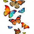 Stock Photo: Many different butterflies, isolated on white background