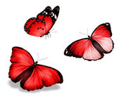 Three red butterfly, isolated on white background — Stock Photo