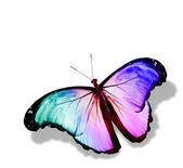彩色蝴蝶,孤立在白色 — 图库照片