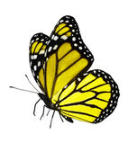 Yellow butterfly on white background — Stock Photo
