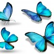 Four blue butterflies, isolated on white background — Stock Photo