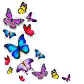 Many color different butterflies flying — Stock Photo