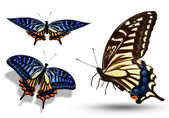 Three color butterflies isolated on white — Stock Photo