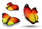 Tři barevné motýly, izolované na bílém — Stock fotografie