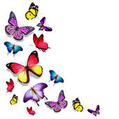Many color different butterflies flying — Stockfoto