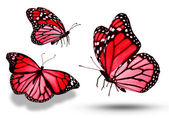 Three red butterflies, isolated on white — Stock Photo