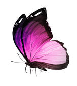 Pink butterfly on white background — Stock Photo