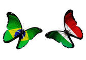 Two butterflies with Brazil and Mexico flags flying — Stock Photo