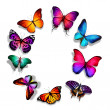 Circle of butterflies — Stock Photo #40329895