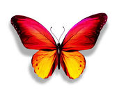 Gold yellow butterfly — Stock Photo