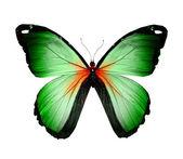 Zielony motyl — Zdjęcie stockowe
