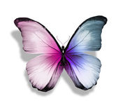 Blue and pink butterfly — Stock Photo