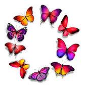 Différents papillons — Photo