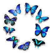 Blue butterflies — Stock Photo
